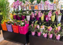 Composizioni di fiori e piante