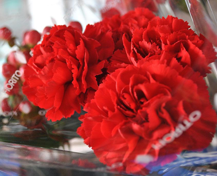 comprare-fiori-freschi