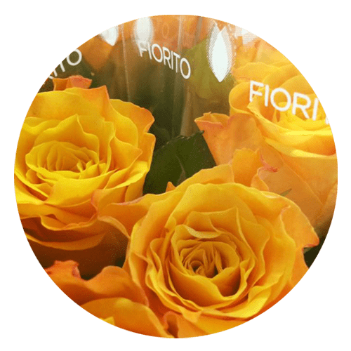 perchè scegliere franchising fiori