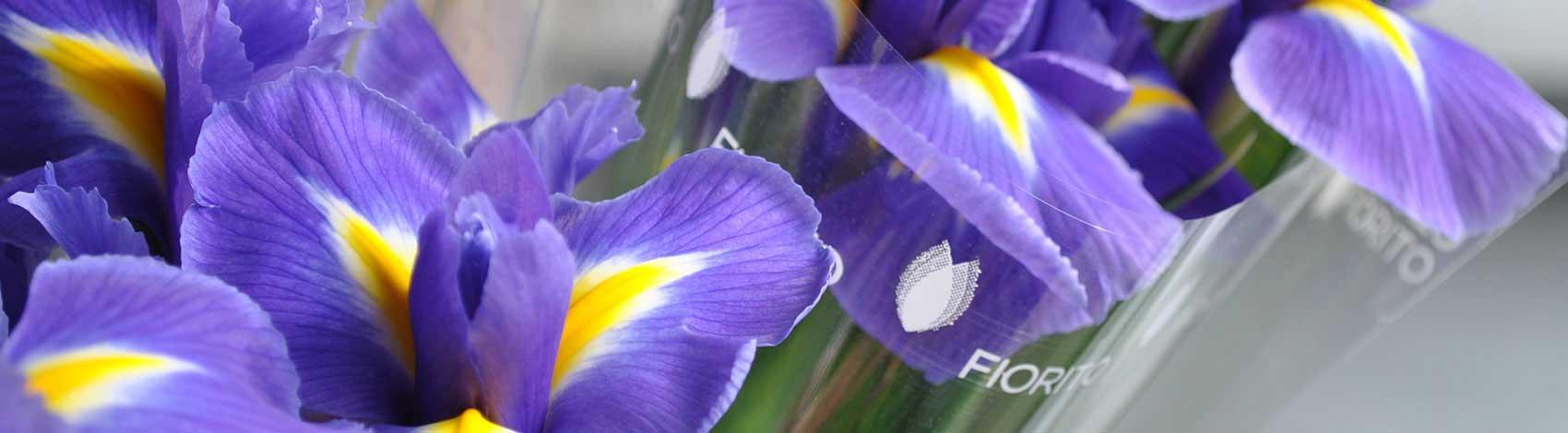 Franchising Fiori E Piante : Negozi di fiori e piante fiorito