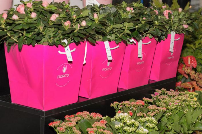 Piante e piantine fiorite in esposizione