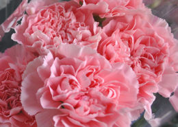 negozio fiori fiorito como
