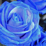 negozio fiori fiorito Lecco