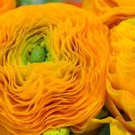 negozi fiori fiorito Borgomanero