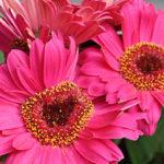 negozio fiori fiorito Luino