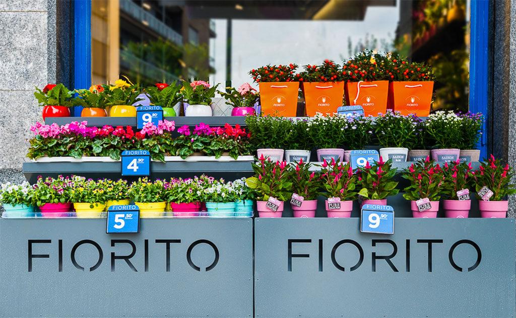 Franchising Fiori E Piante : Piante verdi e fiorite fiorito