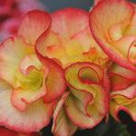 negozio fiori fiorito San Benedetto del Tronto