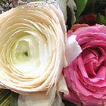 negozio fiori fiorito Lissone