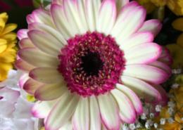 Fiorito Abbiategrasso negozio di fiori