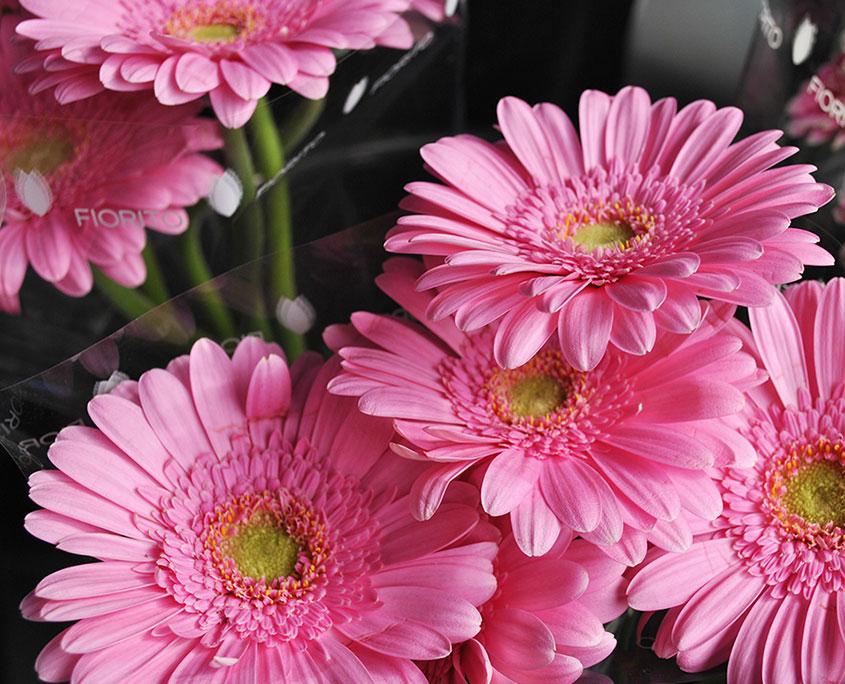 fiori recisi di prima scelta