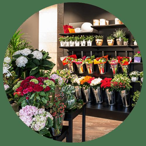 negozi-di-fiori-e-piante