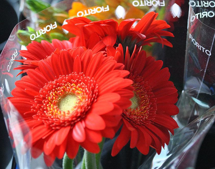 negozi-di-fiori-recisi