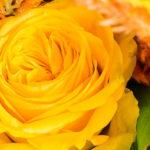 negozio fiori fiorito Milano Bonomelli