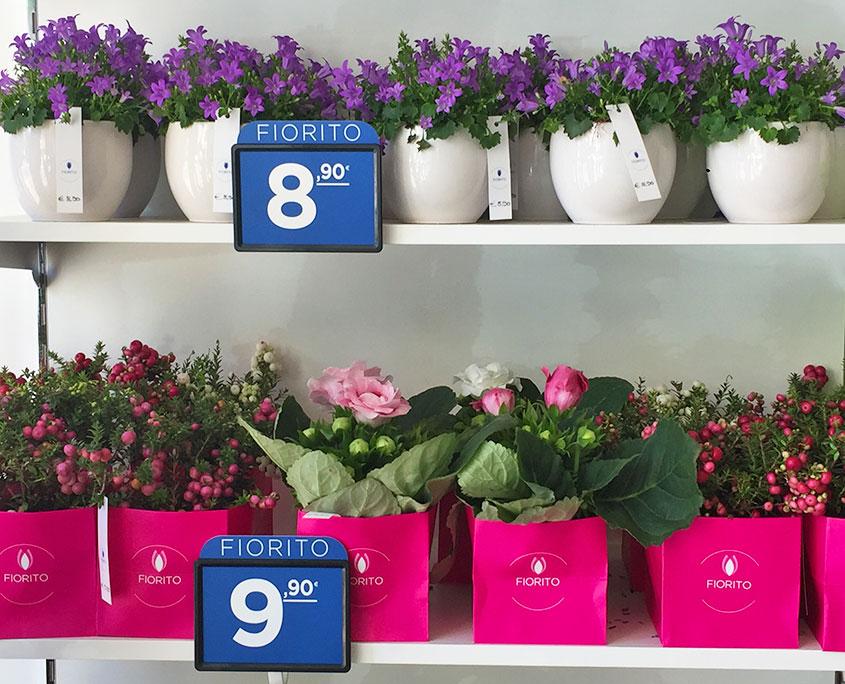 piante-fiorite-in-vaso