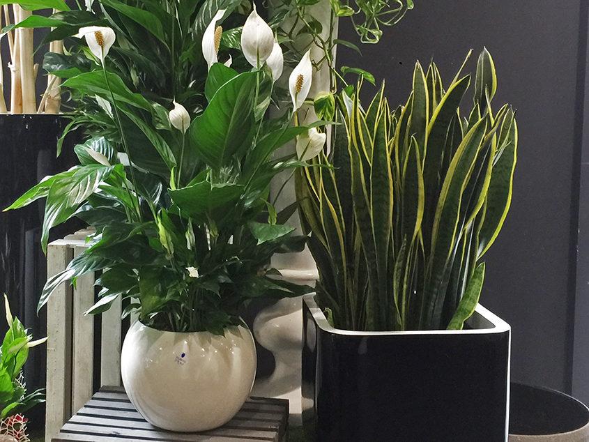 Piante verdi e piante fiorite - Fiorito