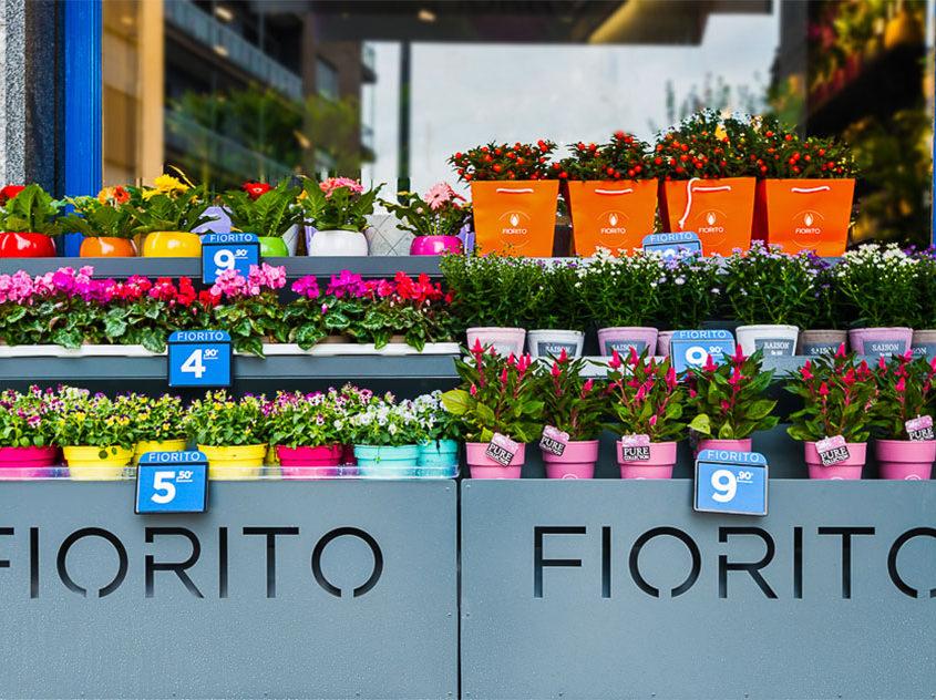 piante-verdi-e-piante-fiorite
