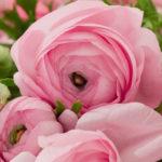 negozio-fiori-abbiategrasso